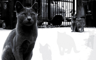Hoodcats EP cover