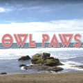 Owl Paws NativeSF Header Image